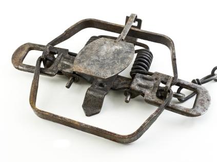 Steel Animal Trap